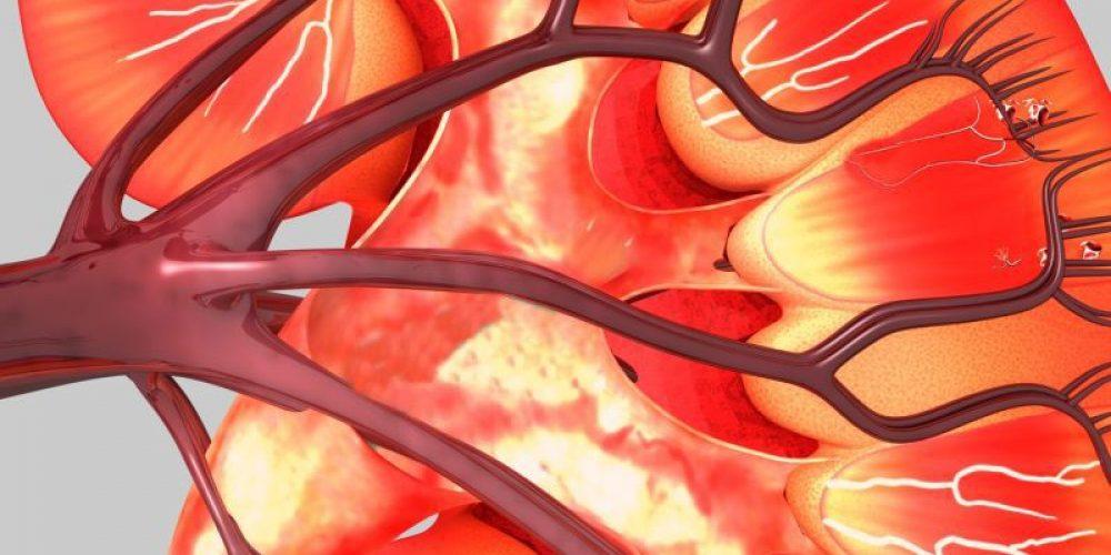 Common Diabetes Drug May Also Shield Kidneys, Heart