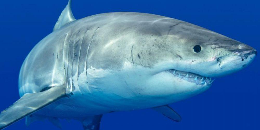 Don't Fear, Shark Attacks Remain Rare