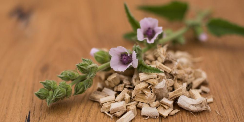 What are the benefits of marshmallow root?