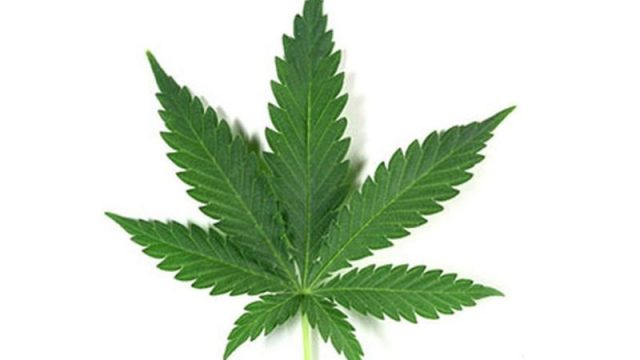 Brain Tumor Patient Used Medical Pot, Landed in ER