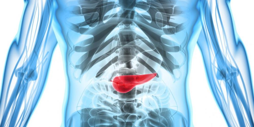 Can you live without a pancreas?