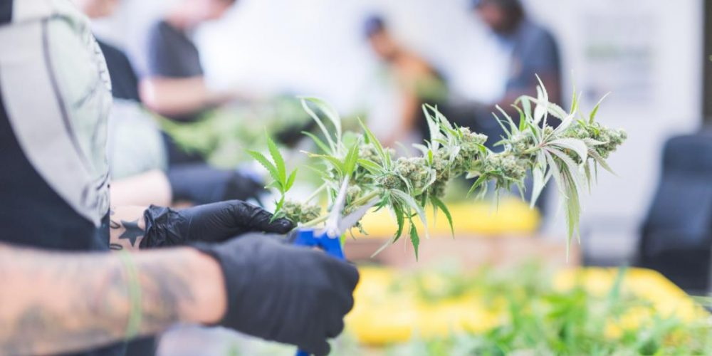 Colorectal cancer: Scientists halt growth with cannabinoid compounds