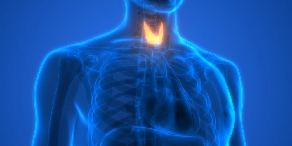 How are thyroid and cholesterol related?