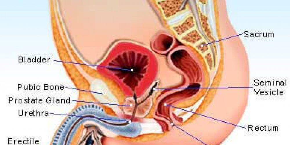 Prostatitis (Inflammation of the Prostate Gland)