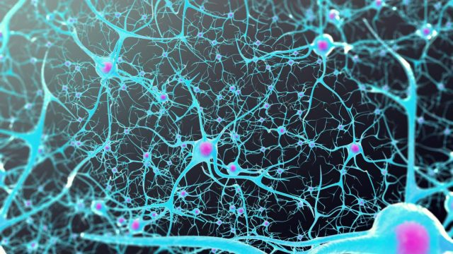 Brain activity has role in human aging and longevity