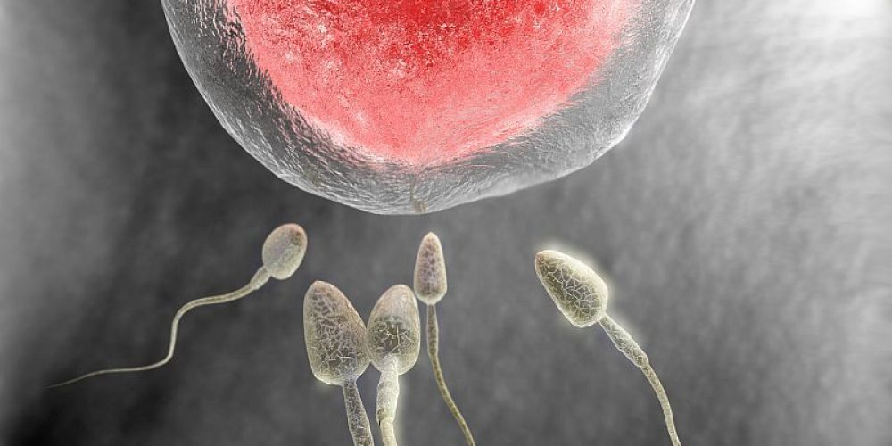 Female Anatomy May Play Big Role in Sperm's Success
