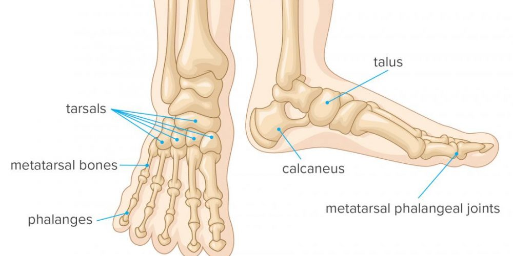 Foot bones: Everything you need to know