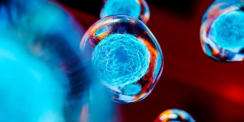 Rejuvenating brain stem cells may hold key to future MS treatments