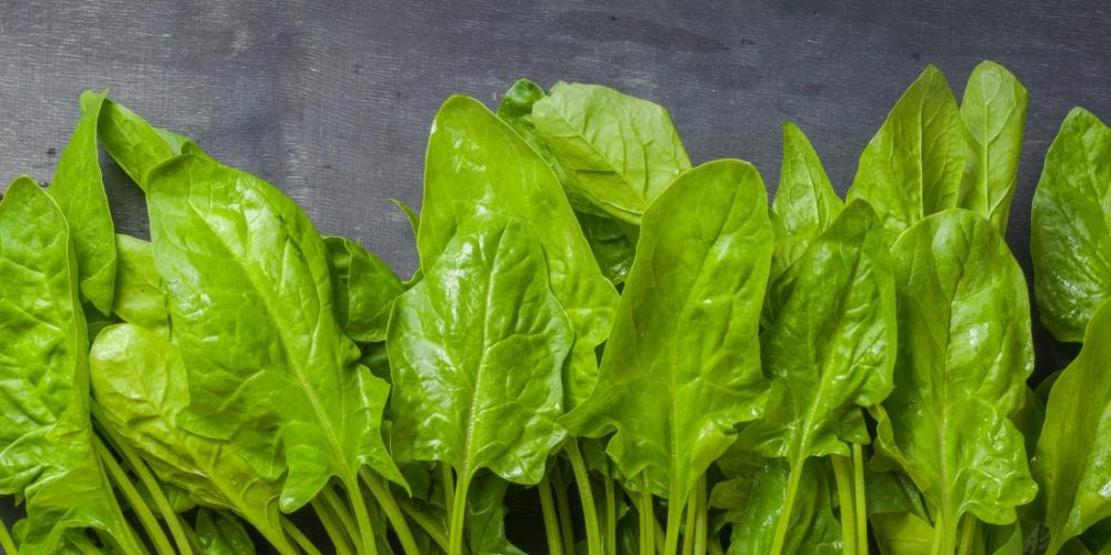Spinach supplement may increase muscle strength