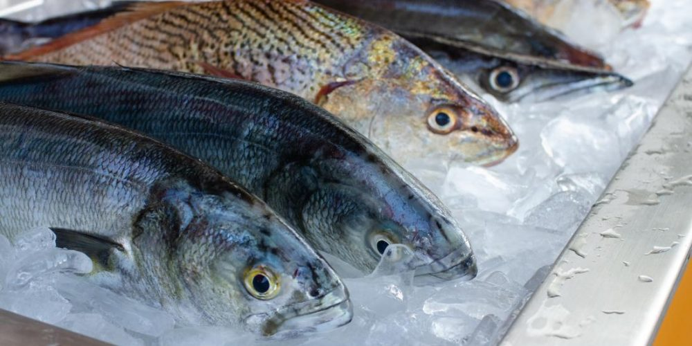 Why fish may become more toxic than ever