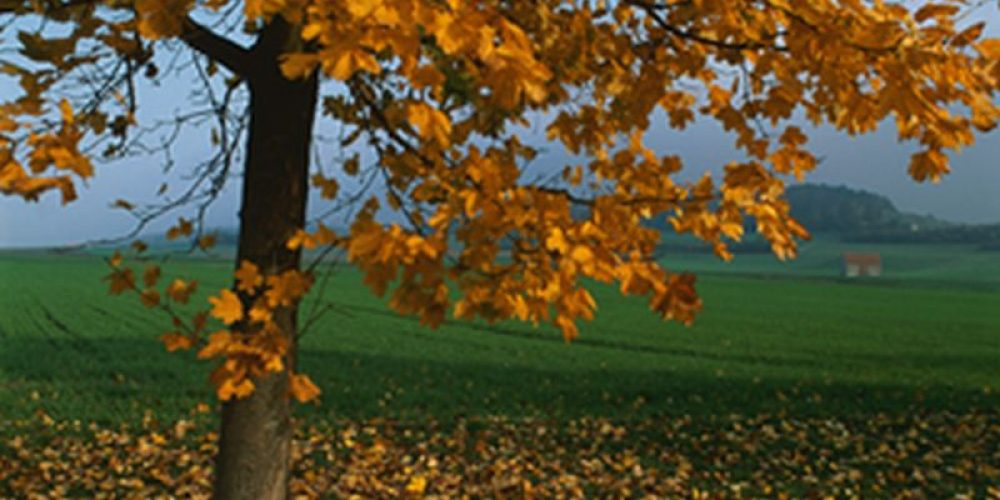A Parent's Guide to Managing Kids' Asthma During the Fall