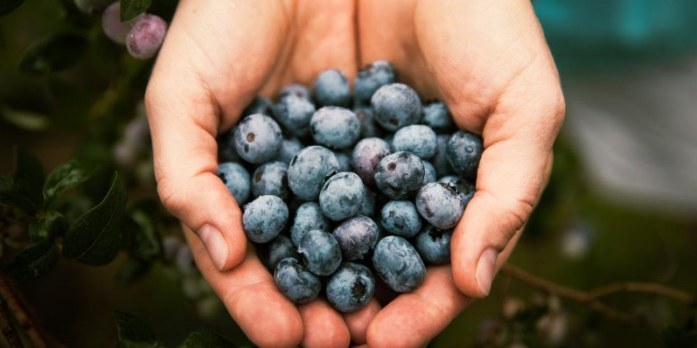 Can blueberries protect heart health?