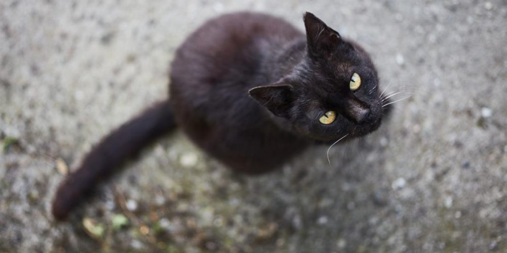 How do superstitions affect our psychology and well-being?