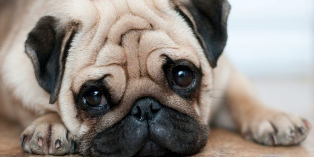 Which Dogs Are More Likely to Bite Your Kids?