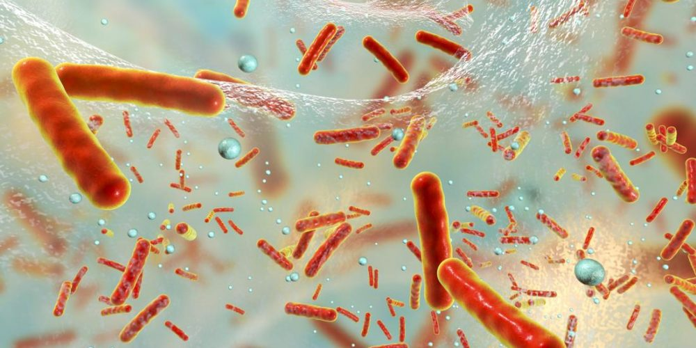 Do gut bacteria affect bowel cancer development?