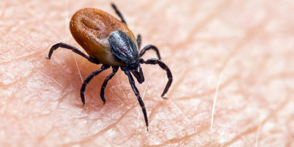 Chronic Lyme disease: Everything you need to know