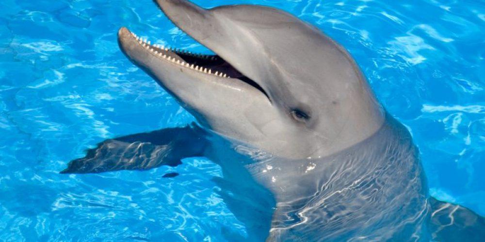 Even Dolphins Are Threatened by Antibiotic-Resistant 'Superbugs'