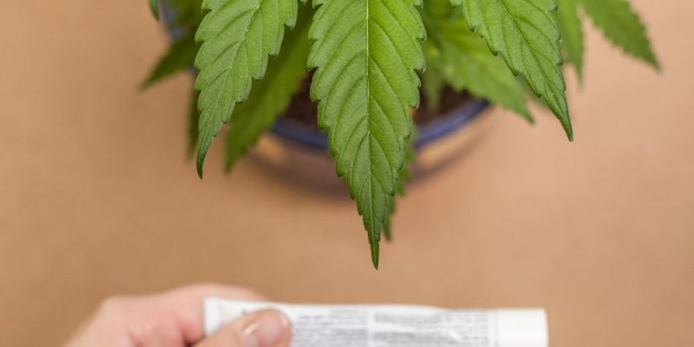 Many Americans Eyeing CBD, Pot as Pain Relievers Without Knowing Risks