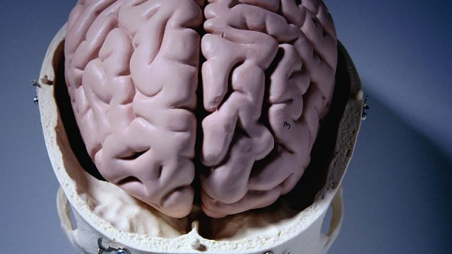 Severe Deprivation in Childhood Has Lasting Impact on Brain Size