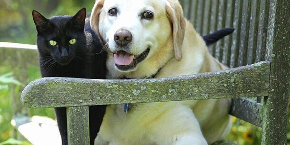Pet Dogs May Reduce Kids' Schizophrenia Risk