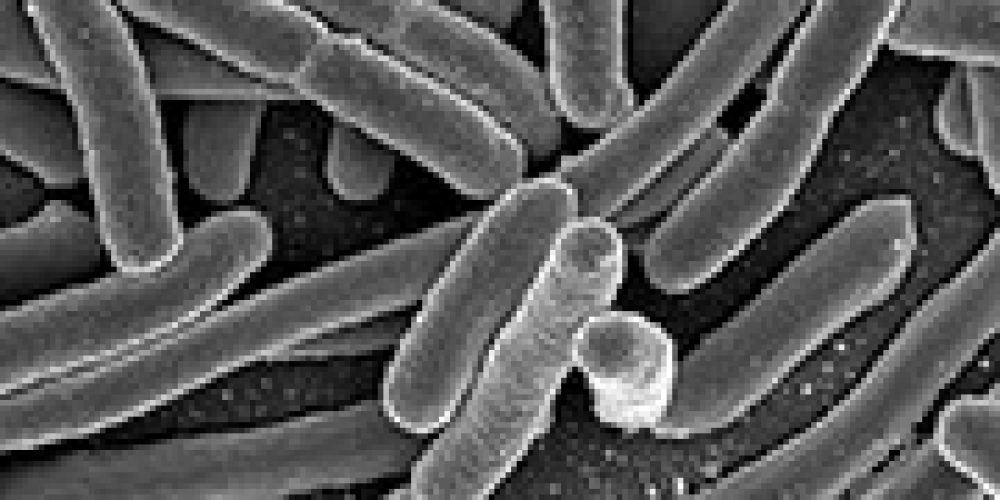 Still No Source as E. Coli Outbreak Grows to 96 Cases Across 5 States: CDC