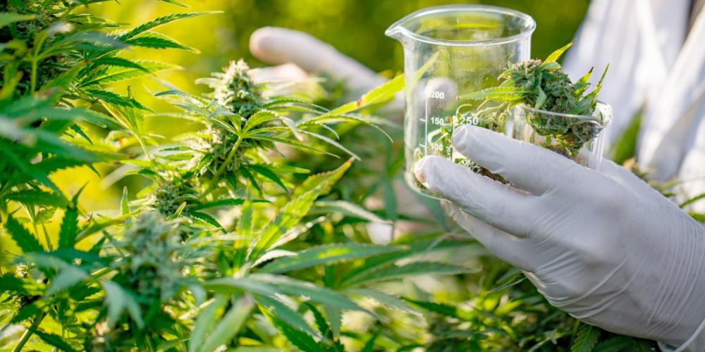 Synthetic CBD may be a safe treatment for seizures