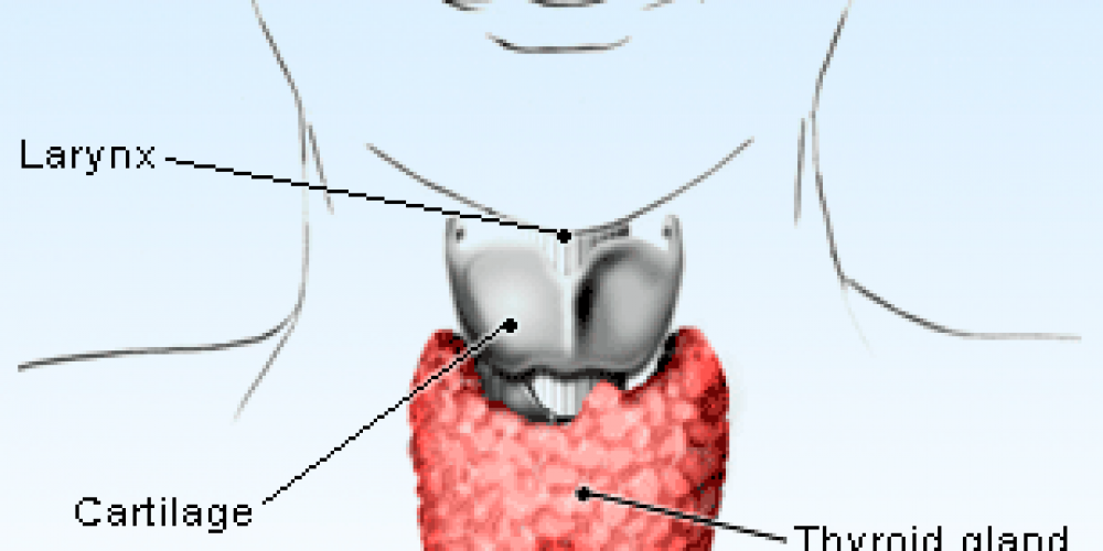 Thyroid Peroxidase Test