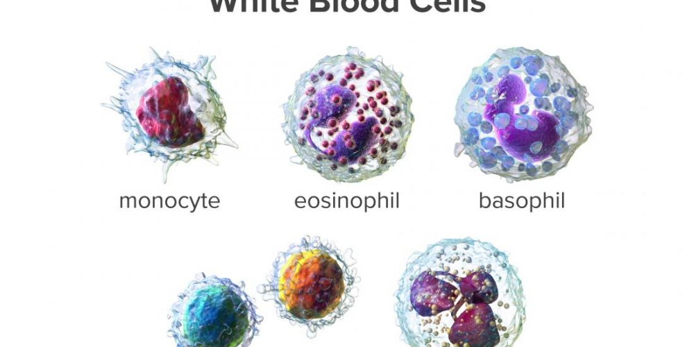 What to know about white blood cells