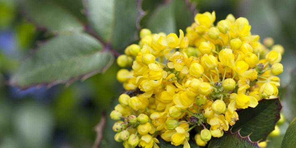 Which herbs can help with psoriasis?