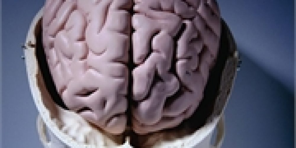 Differences Found in Brains of Kids Born to Depressed Parents