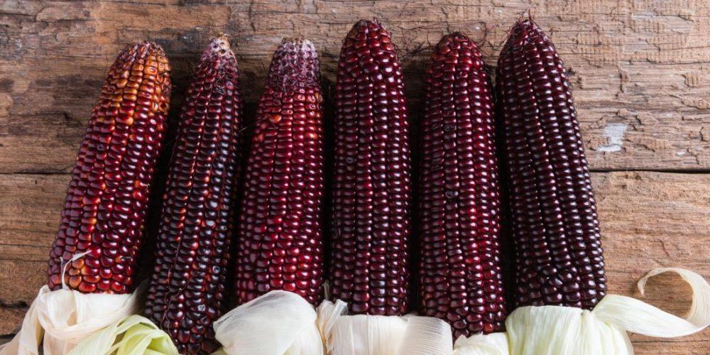 Can purple corn reduce inflammation, diabetes?