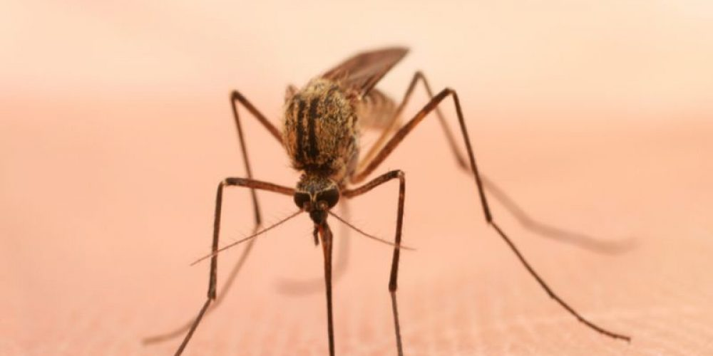 Climate Change Will Aid Spread of Disease-Bearing Mosquitoes