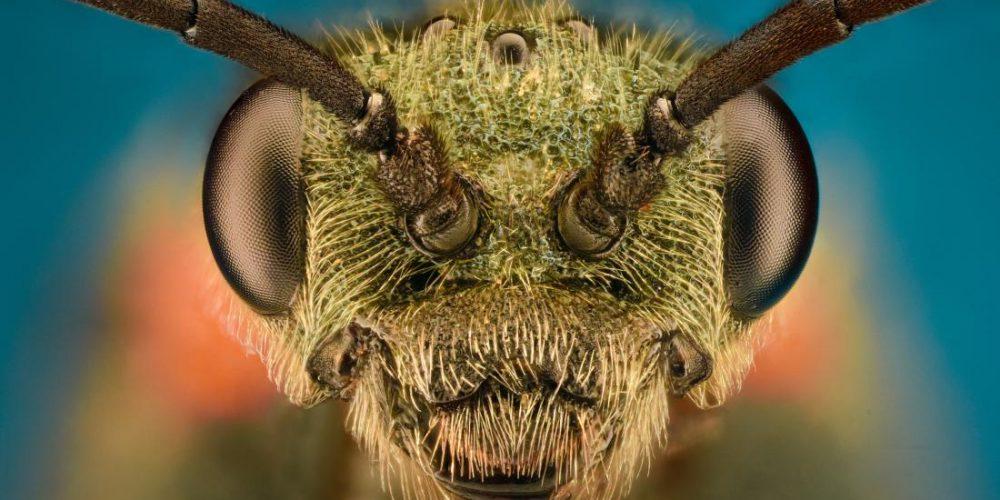 3 creepy crawlies that may revolutionize health