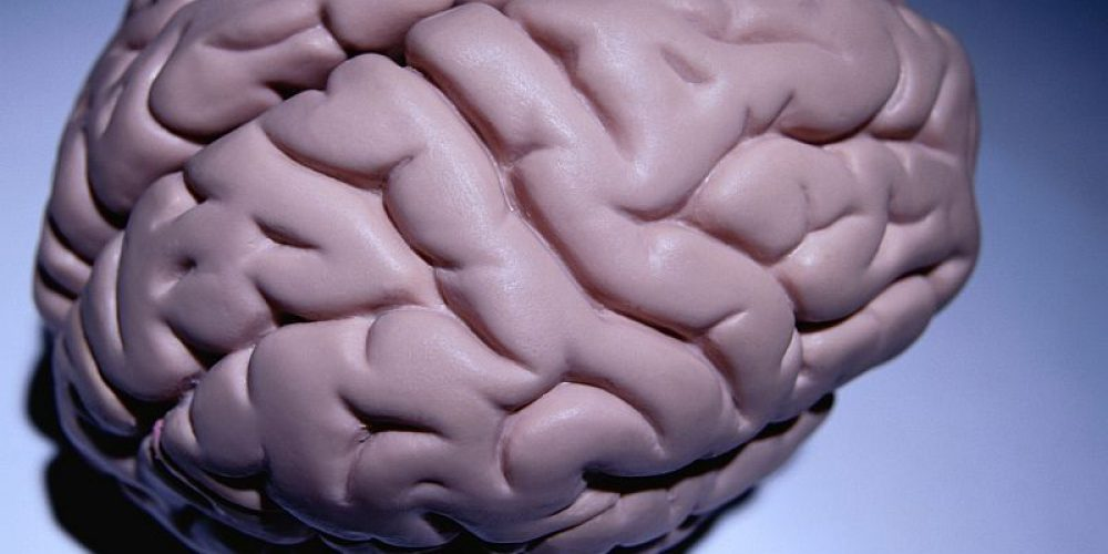 Can Obesity Shrink Your Brain?