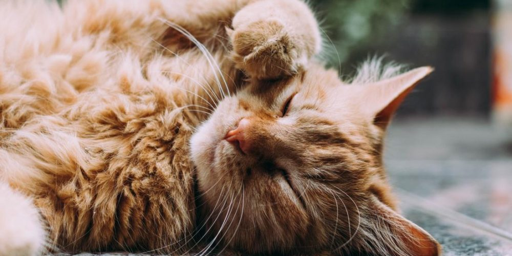 Cat lovers, this is how a feline friend can boost your health