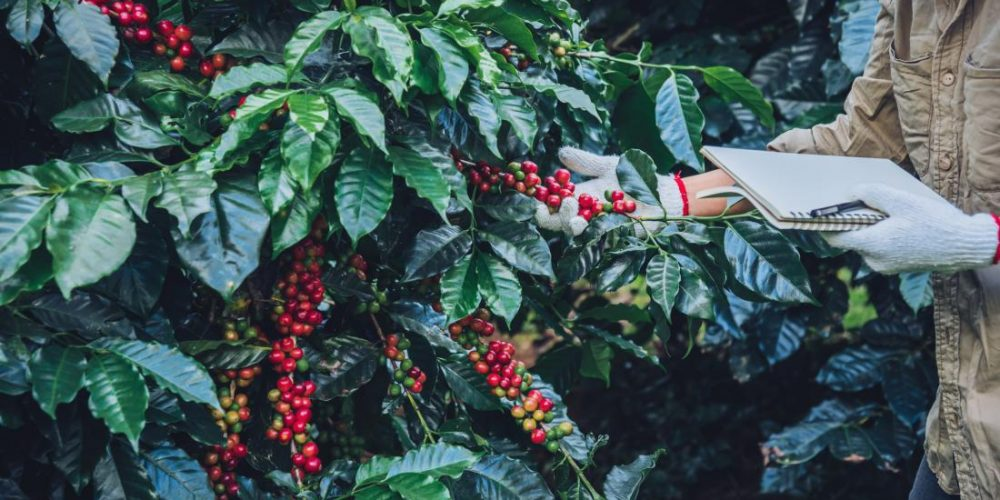 Could coffee byproducts fight inflammation?