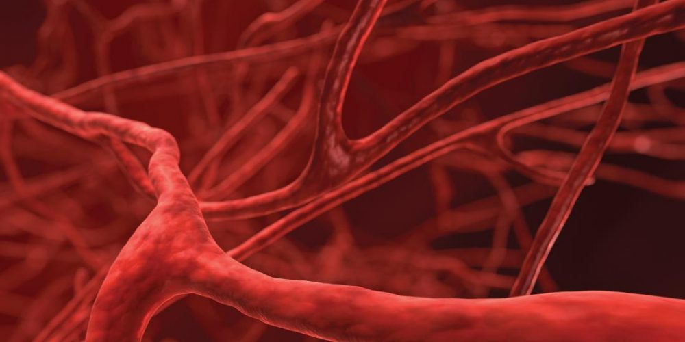 How blood vessel health may drive IBD