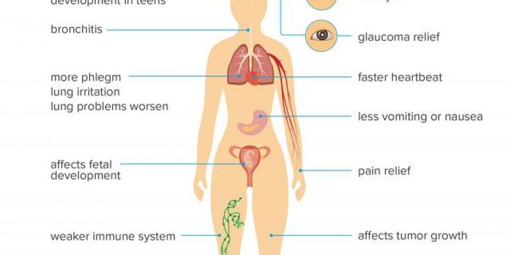 How marijuana affects the body