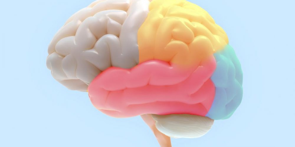 Scientists find brain area that inhibits fear