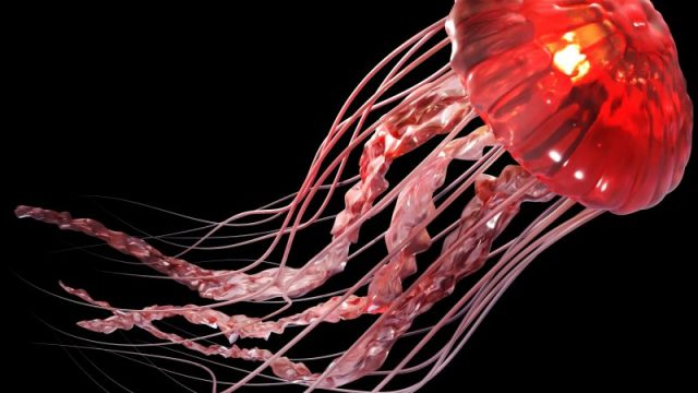 What's Source of 'Stinging Water'? Jellyfish Release Toxic Mucus