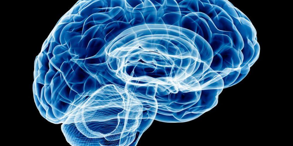Brain study probes molecular origins of anxiety