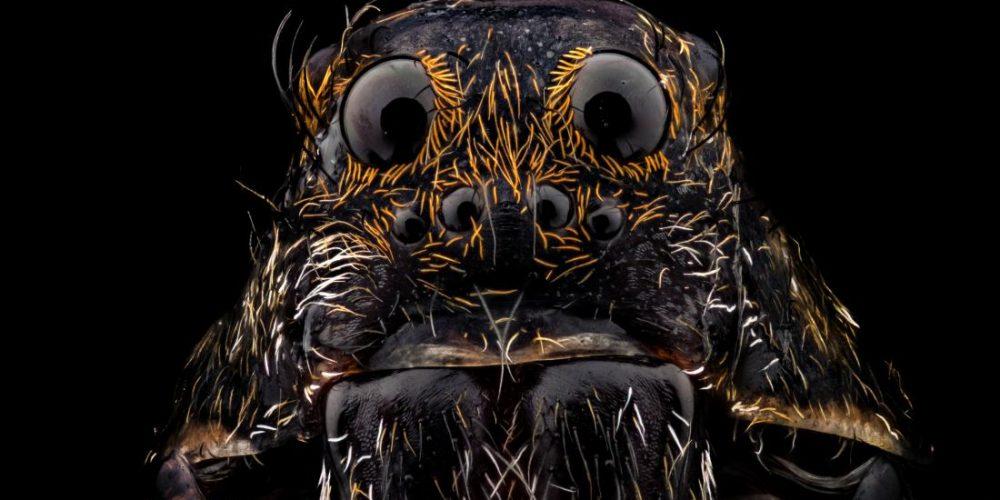 Exploring spider venom's dual attack
