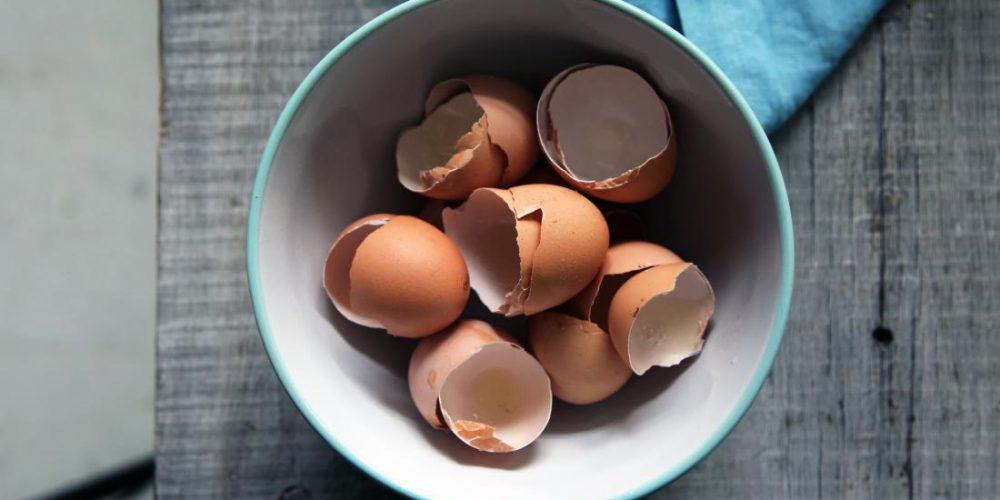 How crushed eggshells could help repair bone damage