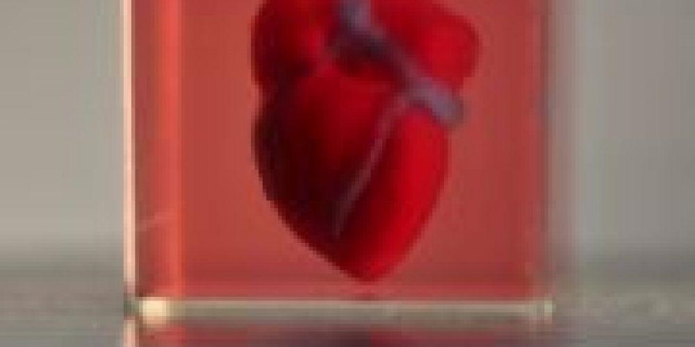 Israeli Team Announces First 3D-Printed Heart Using Human Cells
