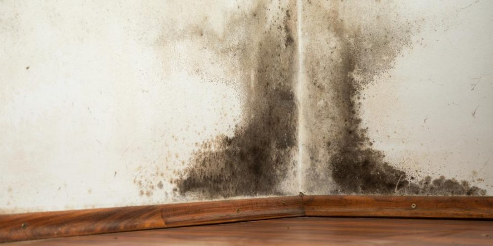 What are the effects of black mold exposure?
