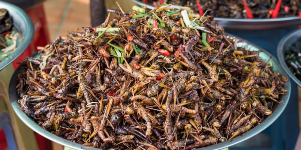 Are crickets and other creepy crawlies the new superfood?