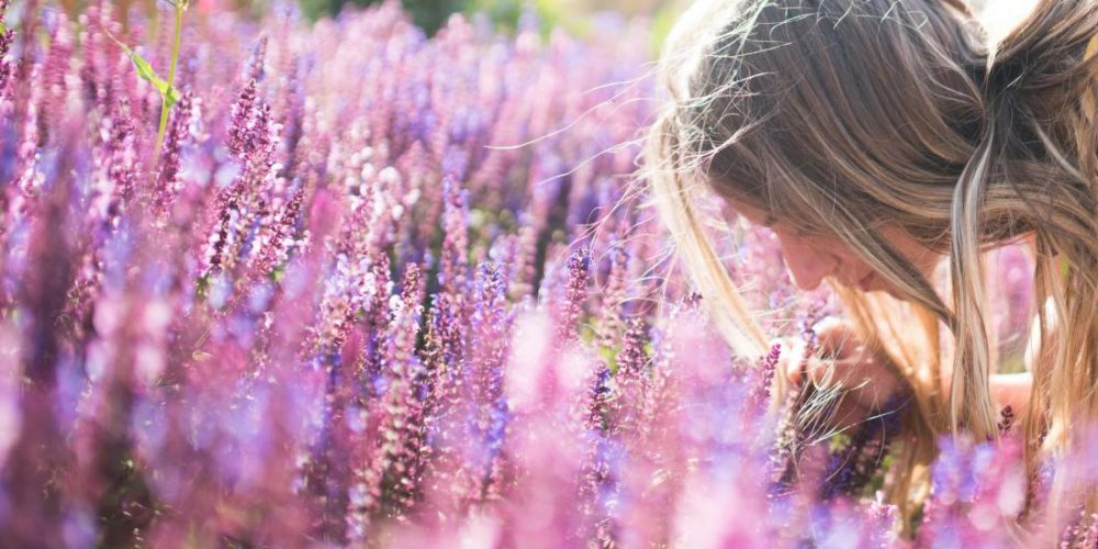 Does lavender really help with anxiety?