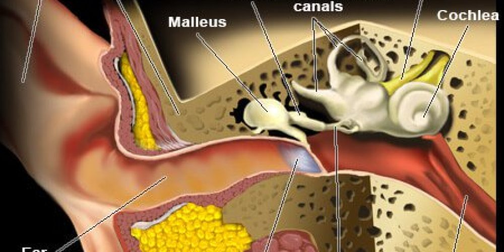 Inner Ear Infection (Symptoms, Signs, Treatments, Home Remedies)