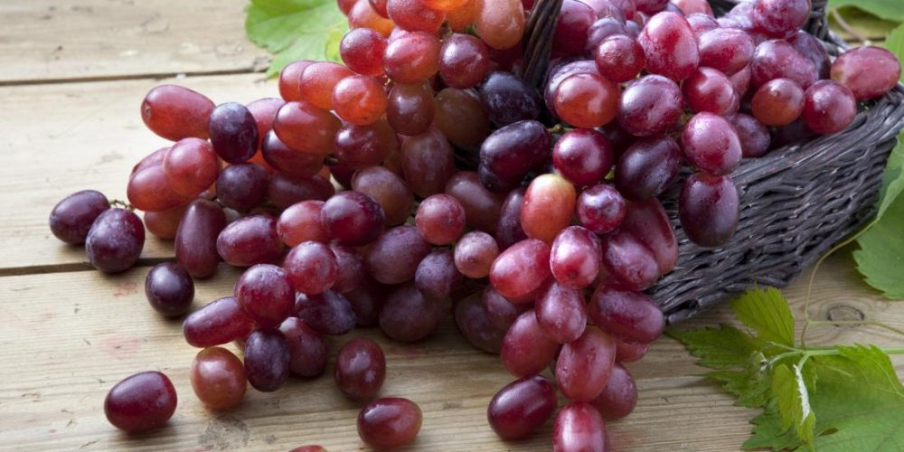 Nasal delivery of grape compound shows promising results in lung cancer