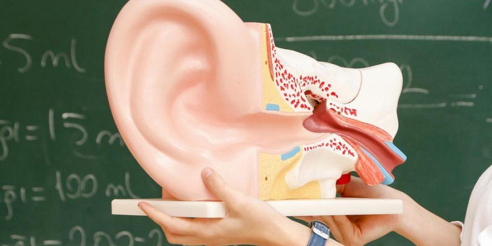 Reversing hearing loss by regrowing hairs